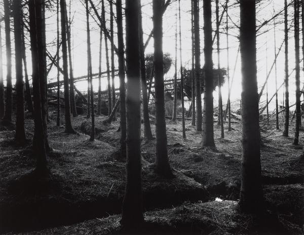Kielder Forest (1980 (printed 1999))