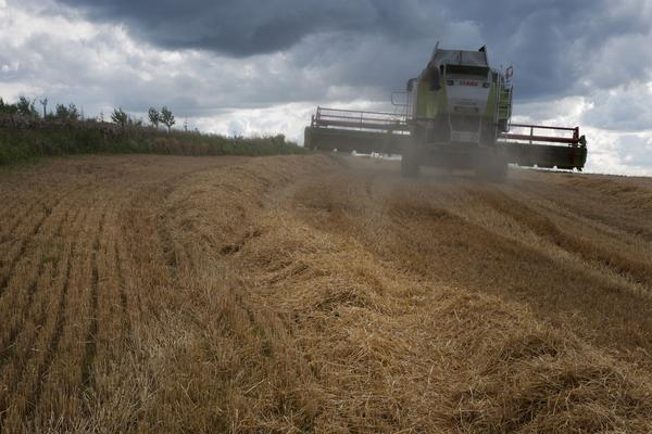 Harvesting Barley Along the Strathmore Valley, Near Coupar Angus
